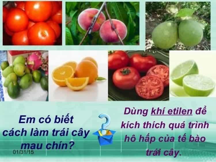 khí etilen làm cho trái cây mau chín
